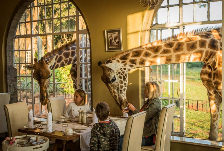 Giraffe-Breakfast-in-the-Sunroom-at-Giraffe-Manor